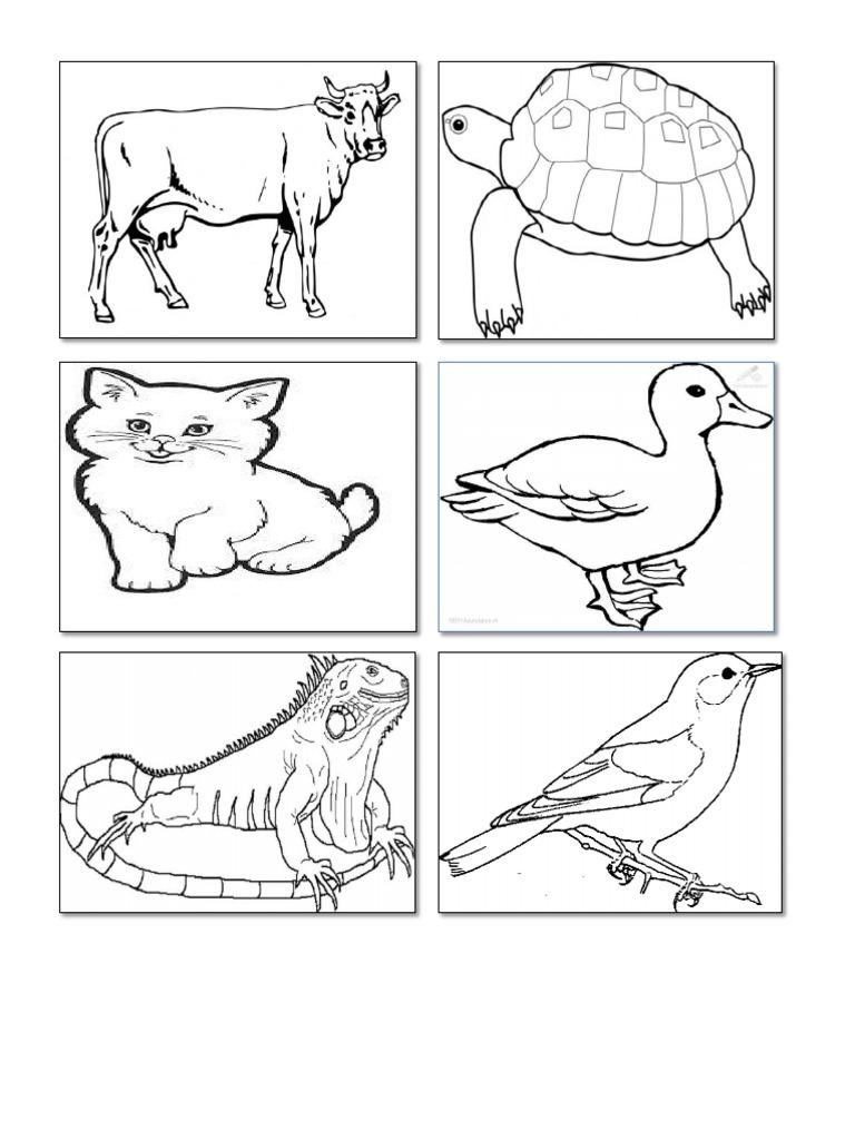 Gambar Hitam Putih Binatang Mudah