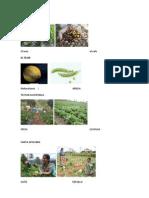 Cultivos de Los Municipios de Chimaltenango