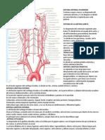 Sistema Arterial Pulmonar