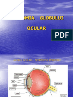 Anatomia Globului Ocular - Curs 1