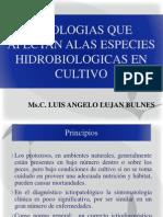 Clase 2 y 3 de Patobiologia