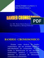 BANDEO__CROMOSOMICO