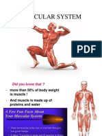 The Muscular System by Group 5
