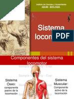 Sistema Oseo Repaso Integral Ketvin (1)