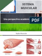 Sistema Muscular Una Perspectiva Clínica