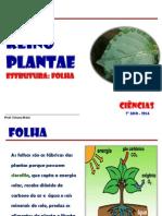 Reino Plantae Folha 2014.