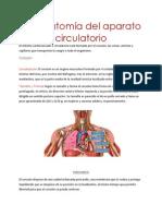 10. aparato cardiaco