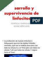Desarrollo y Supervivencia de Linfocitos Embriologia