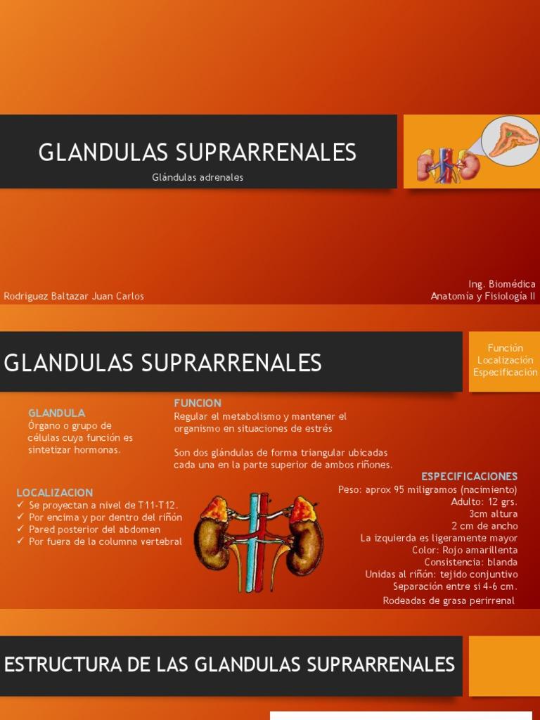 Glandulas suprarrenales exposicion