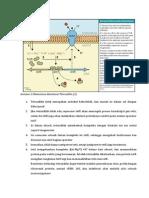 Tetracycline Resistance Mechanism