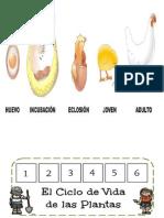 ciclo vital.docx
