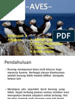 ppt aves.pdf