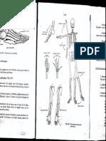 Articulacion Musculos Anatomia