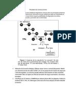 PRUEBAS DE COAGULACION.docx