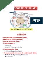 Clase Transporte Celular