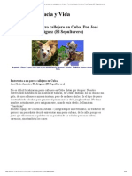 Entrevista a Un Perro Callejero en Cuba