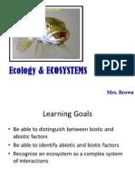 l1 ecosystem structures