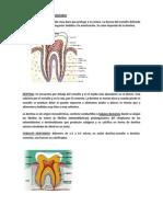 Resumen Estructura Del Tejido Dentario