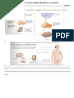 Guia Septimo Funcion Hormmonal Aplicacion