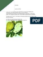 folha de graviola.pdf
