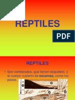 reptiles-120129064937-phpapp02