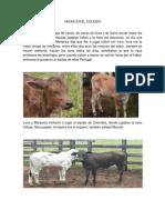 Vacas en El Colegio