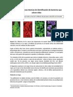 En Colombia, nuevas técnicas de identificación de bacterias que salvan vidas