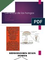 genticadeloshongos-140412150332-phpapp01