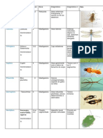 tabela insetos