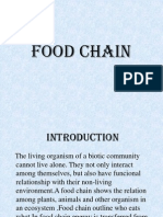 Food Chain Ppt Final Report New