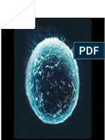 Tema02- Desrrollo Embrionario_ Dismorfologia