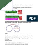 La Regulación de La Expresión Génica Consiste en El Control Que Realiza El Organismo Sobre La Expresión de Los Genes