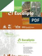 eucalipto (1)