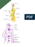 ORGANOS bioneuroemocion.docx
