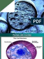 NUCLEO_CELULAR_cromatina_y_cromosomas.ppt