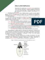 Unidad 3 Apicomplexa Parasitologia 11