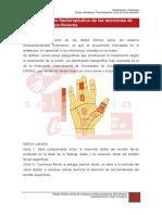 7.5.Tratamiento Fisioterapeutico de Les Seccione de Los Tendones Flexores