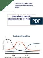 Metabolismo de Los Fosfagenos