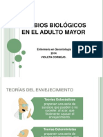 Cambios Biologicos Adulto Mayor