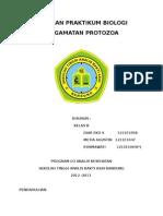 Laporan Pengamatan Protozoa