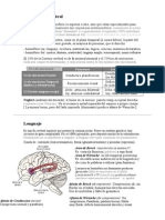 Fisiologia - Neurofisiologia VIII - Lateralidad Cerebral, Lenguaje, Aprendizaje y Memoria
