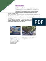 Adaptations of Plants in Different Habitat