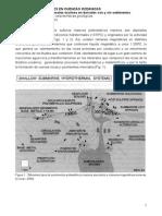 Figuras Sulfuros Masivos Polimetalico