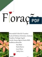 Floração Ok (2).pptx