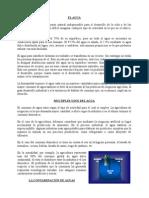 Contaminacion Del Agua (TRABAJO)