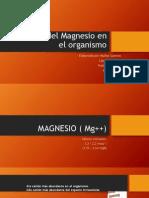 Balance Del Magnesio en El Organismo
