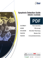 Apoptosis Detection