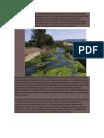 La Eutrofización Es Un Tipo de Contaminación Química de Las Aguas