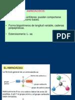 aminoacidos-proteinas1