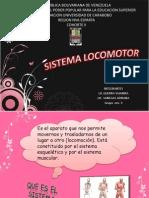 Sistema Locomotor Exposicion